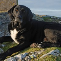 Welsh wonders – with your dog