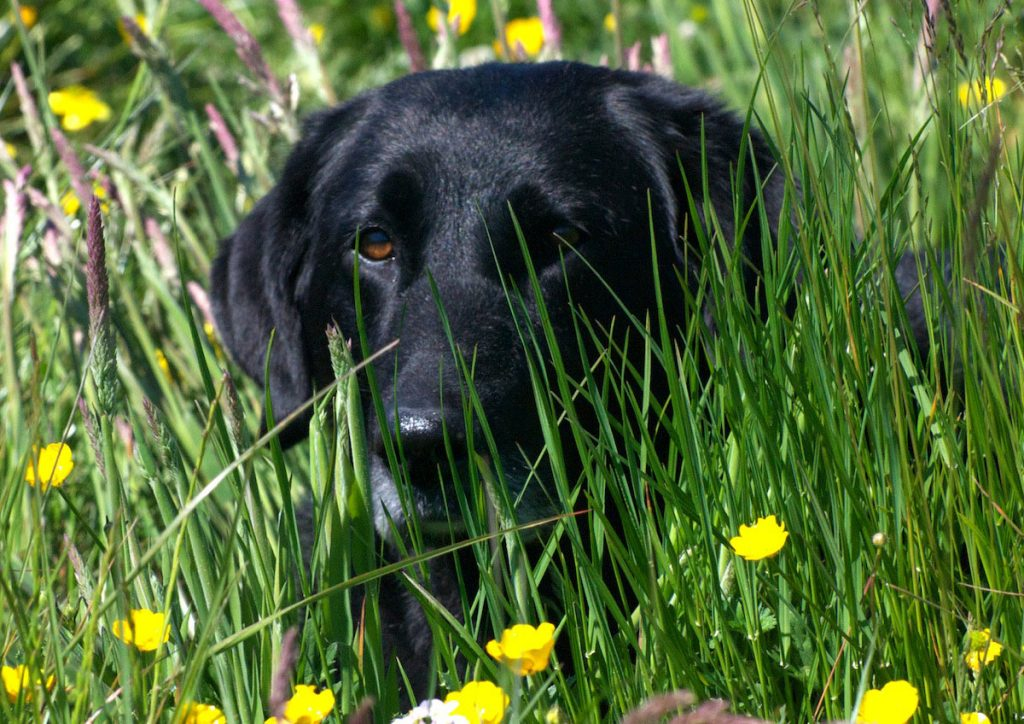 flowers dog wales summer