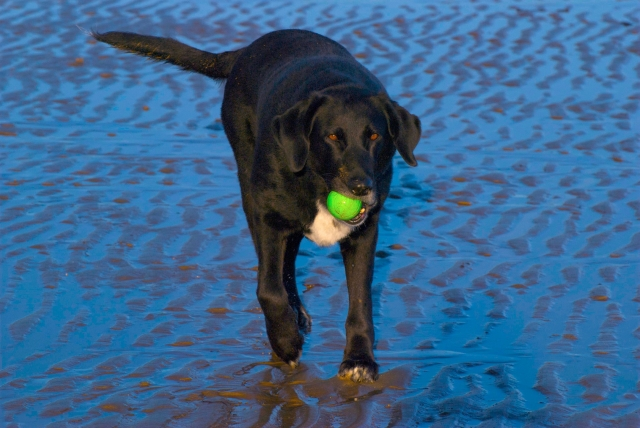 beach ball dog wales anglesey travels woof