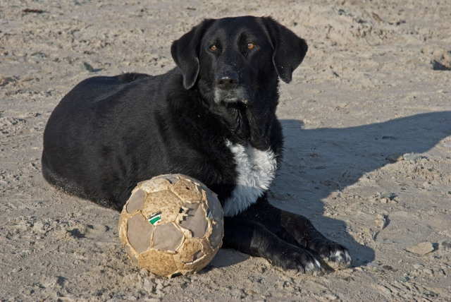 dog beach fun ball woofs travel anglesey wales